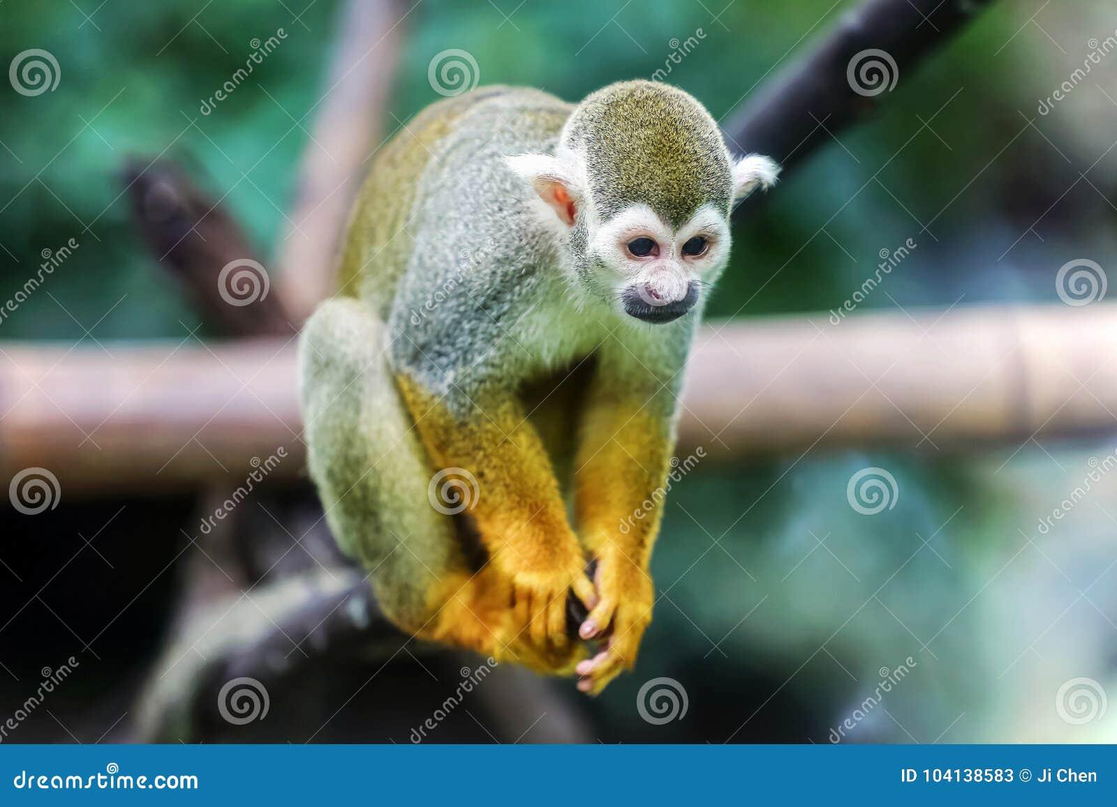 Wiewiórczej małpy obsiadanie na bagażniku