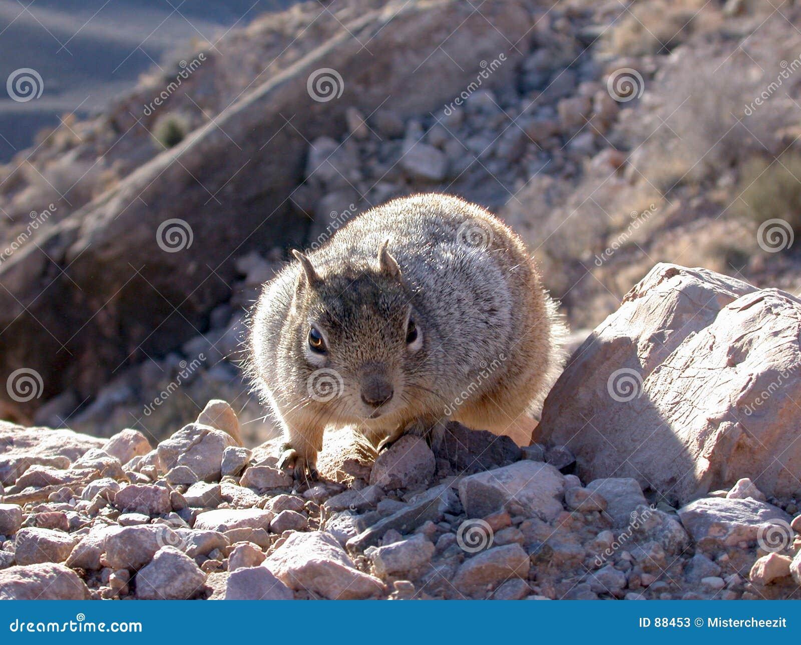 Wiewiórka wycieczkowicz