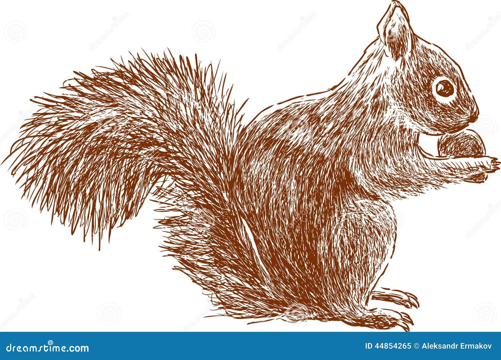 Wiewiórka z dokrętką