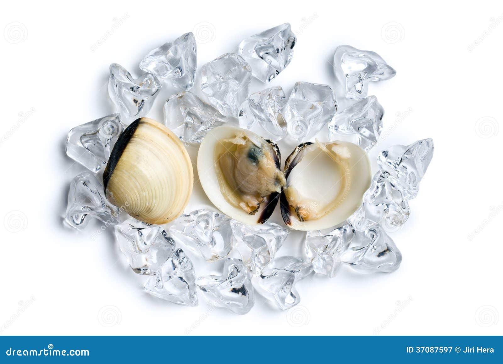 Download Świezi Milczkowie Na Kostkach Lodu Obraz Stock - Obraz złożonej z jedzenie, lód: 37087597