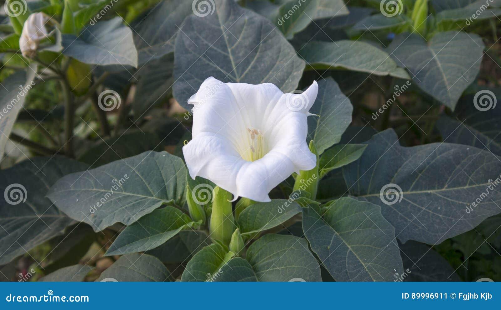 Wight flower