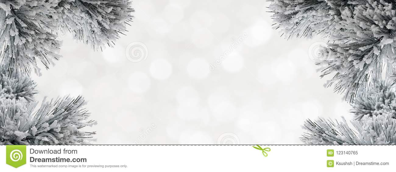 Winter background with snow-covered pine branches