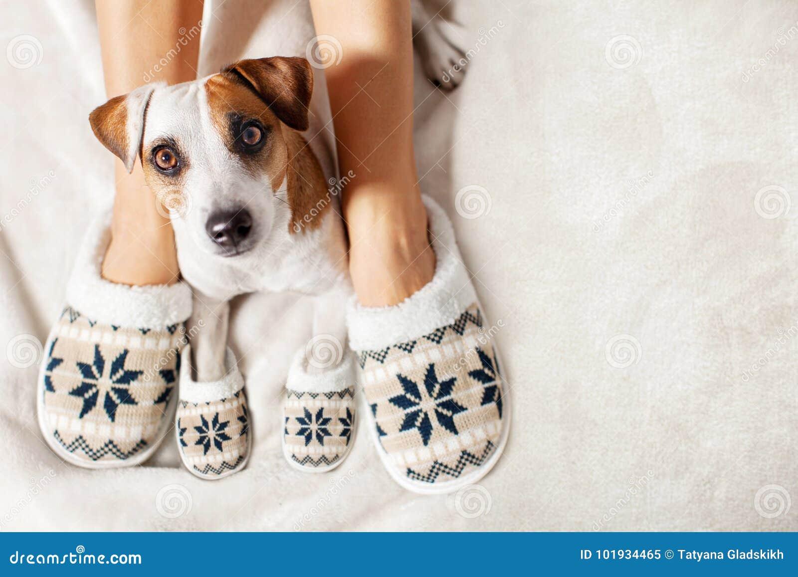 Wijfje en hond in pantoffels