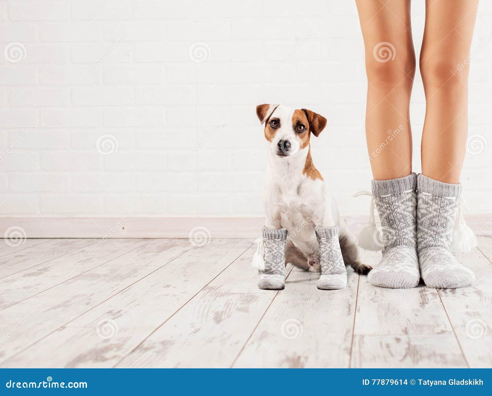 Wijfje en hond in sokken