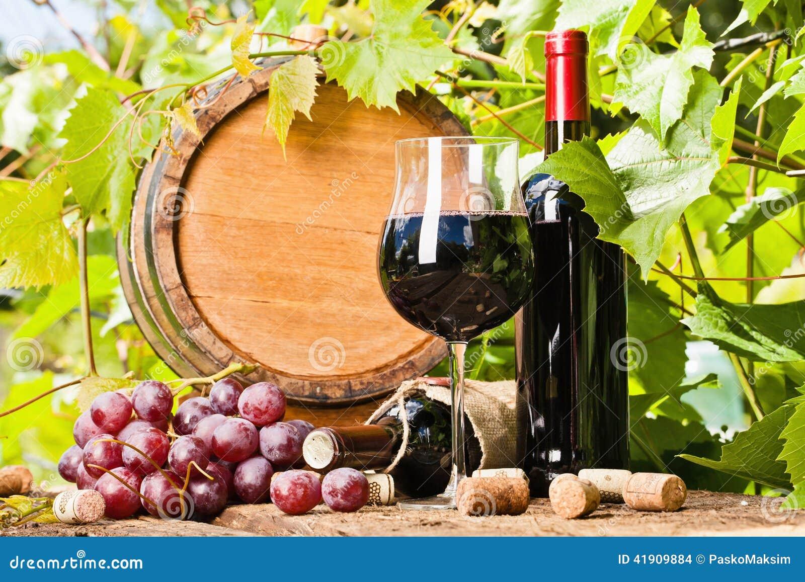 Wijn, druiven en wijnstoksamenstelling