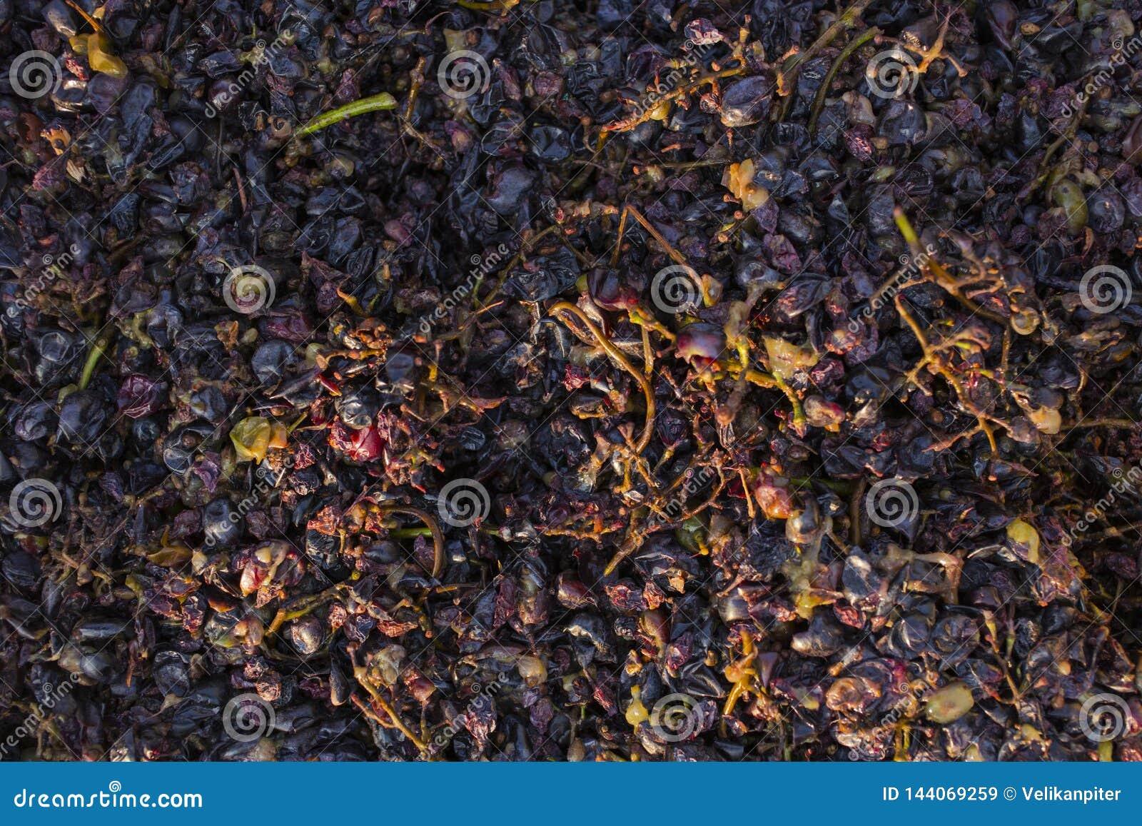 Wijnbereiding Technologie van wijnproductie