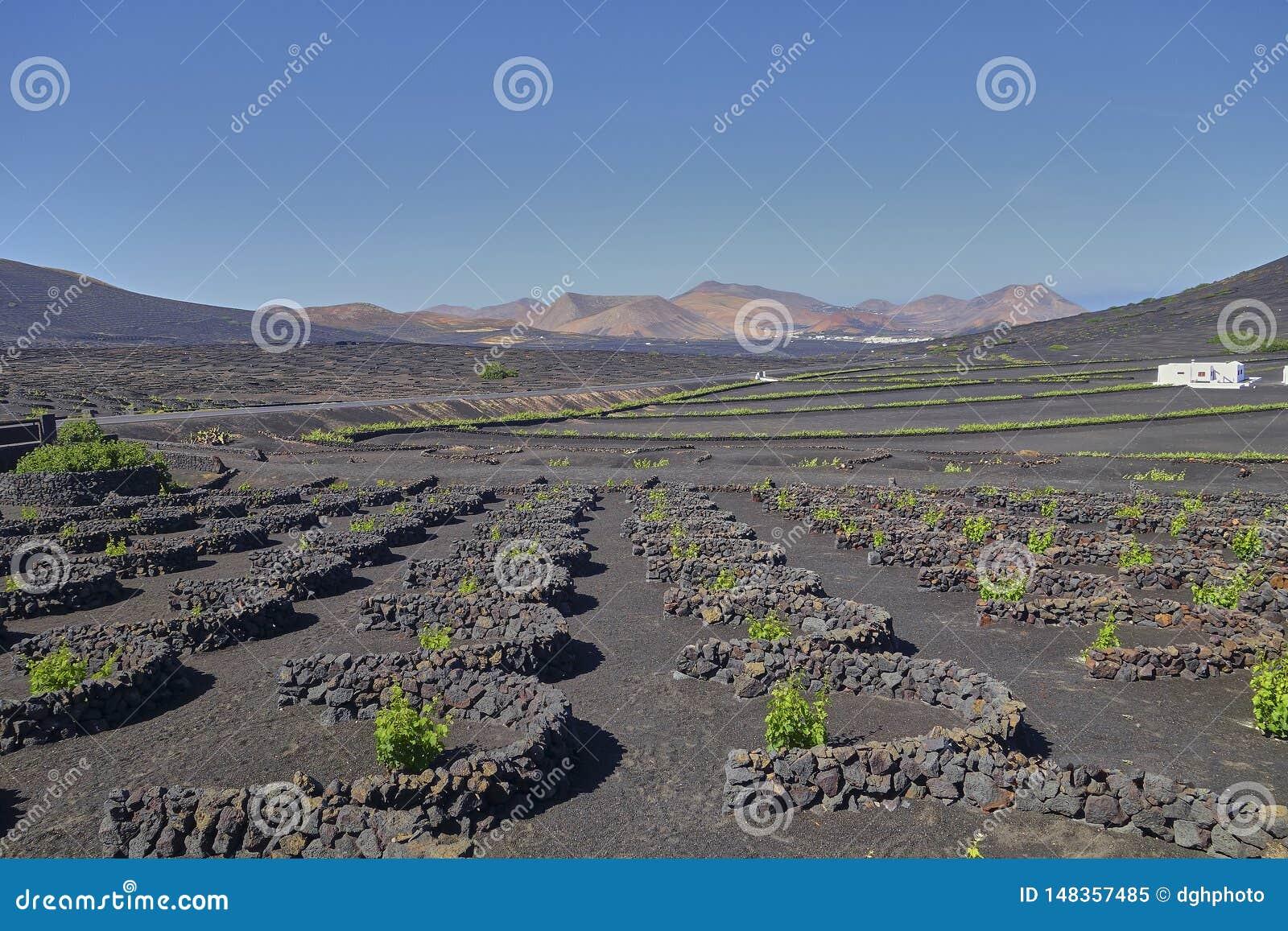 Wijnbouw in La Geria op het Eiland Lanzarote, Canarische Eilanden