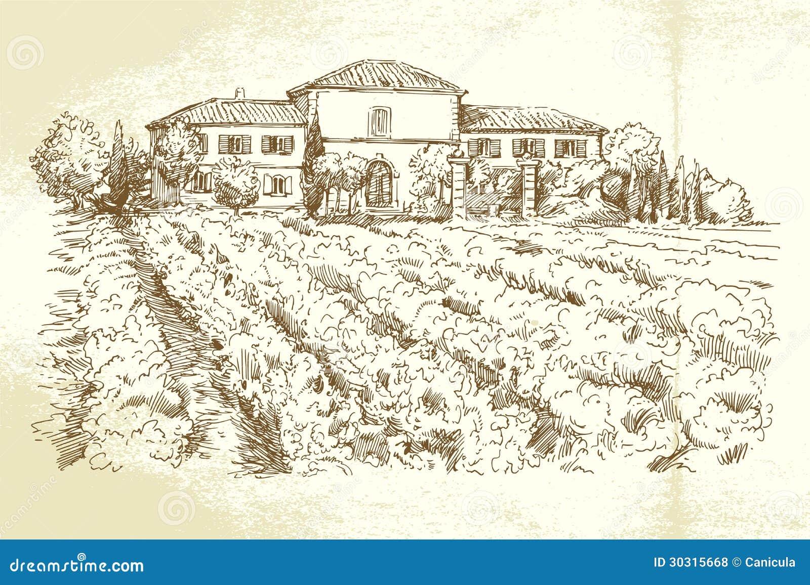 Wijngaard Frankrijk