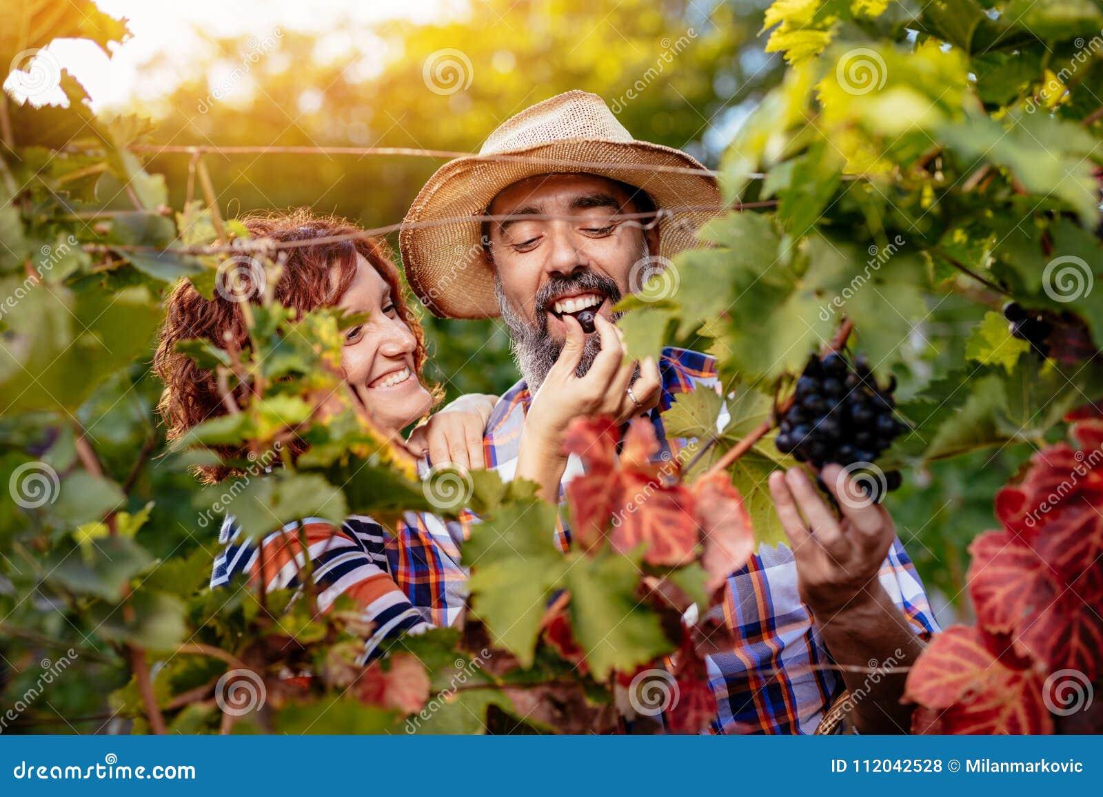 Wijngaard het proeven