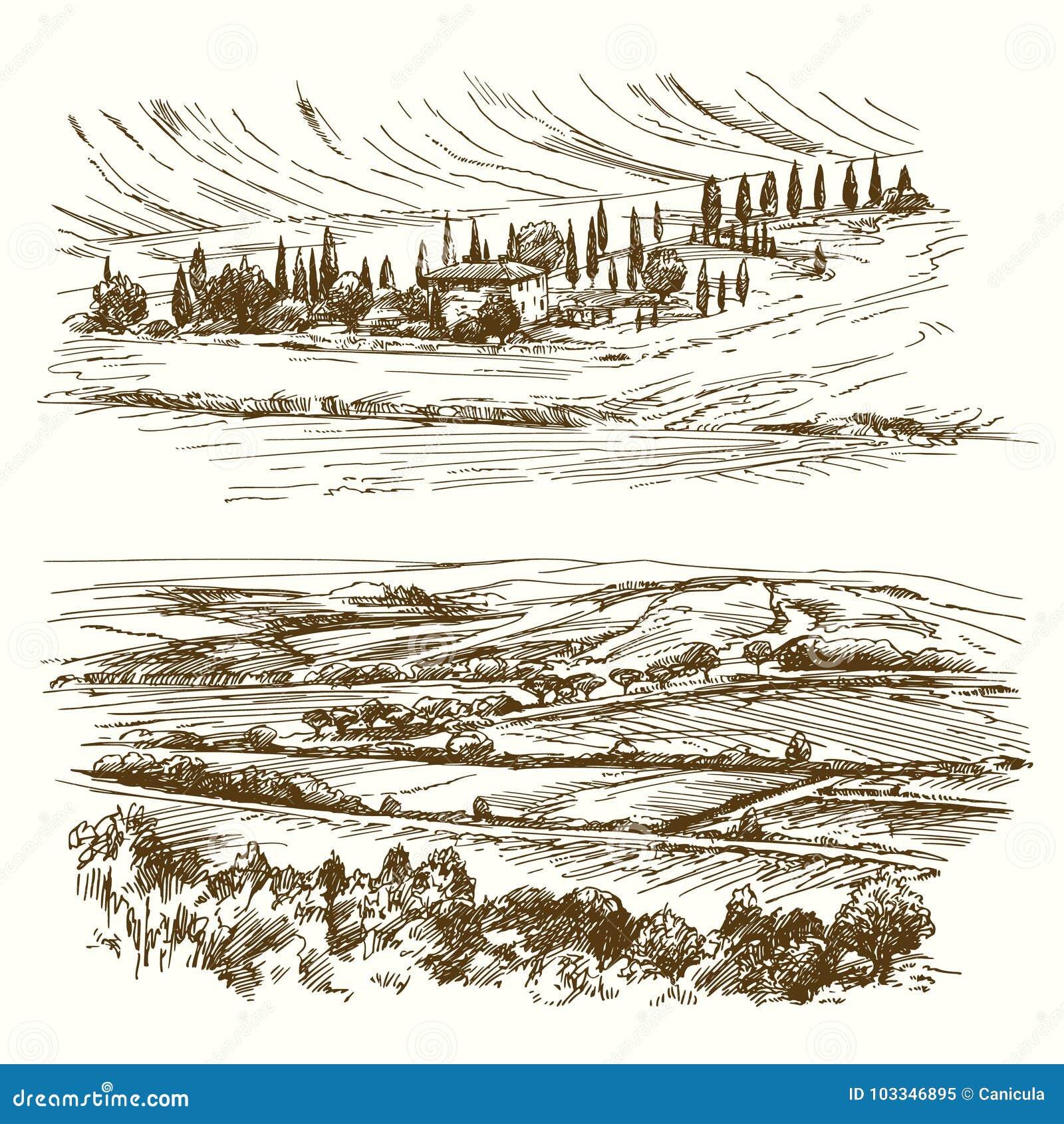 Wijngaard Landbouw landschap