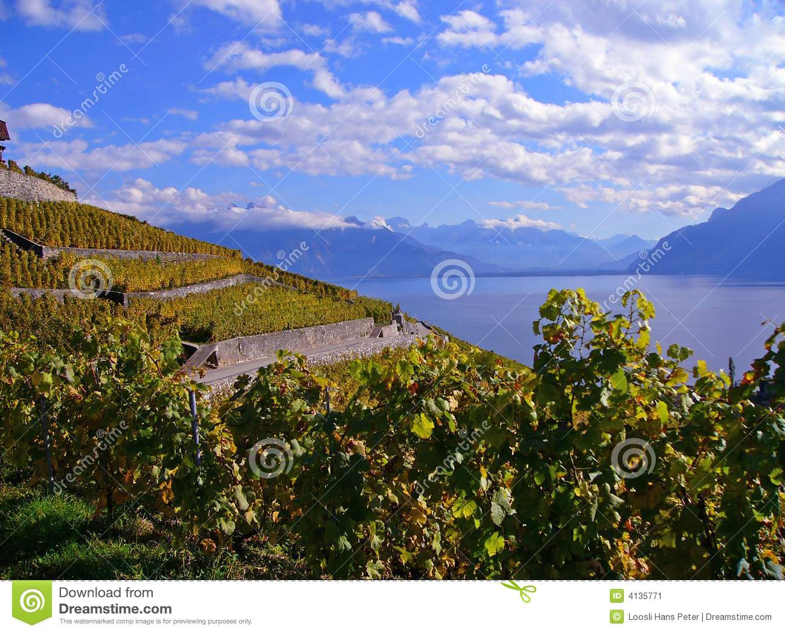 Wijngaarden in Automn