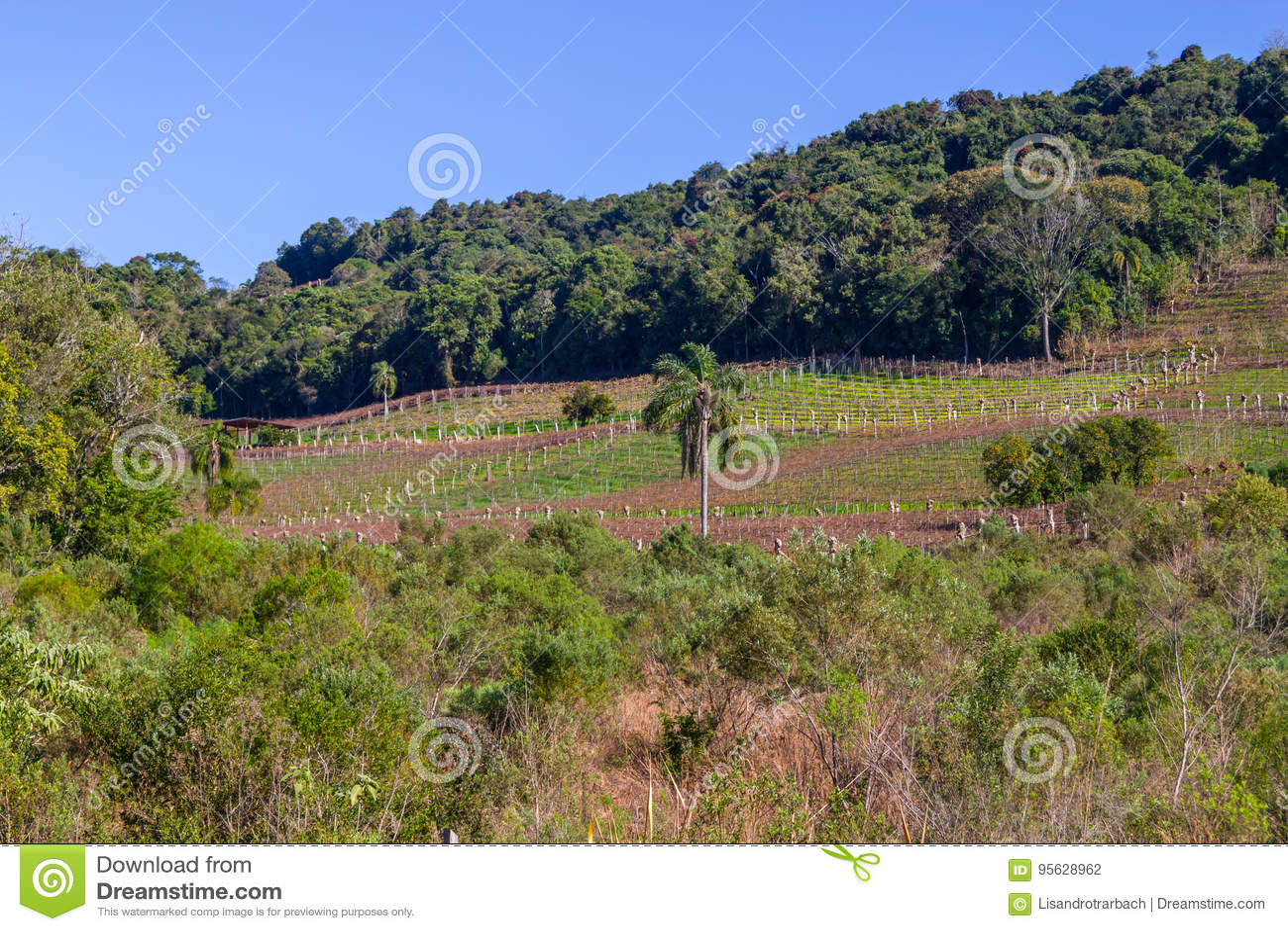 Wijngaarden en landbouwbedrijven in de winter, de vallei van Dos Vinhedos van het Dal
