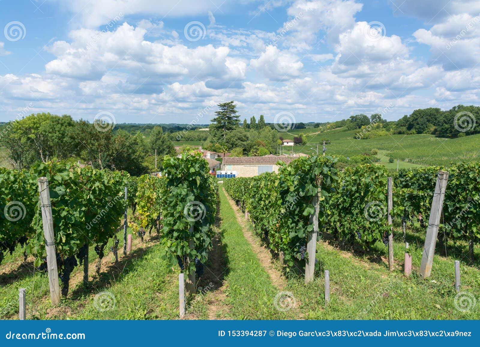 Wijngaarden in Frankrijk