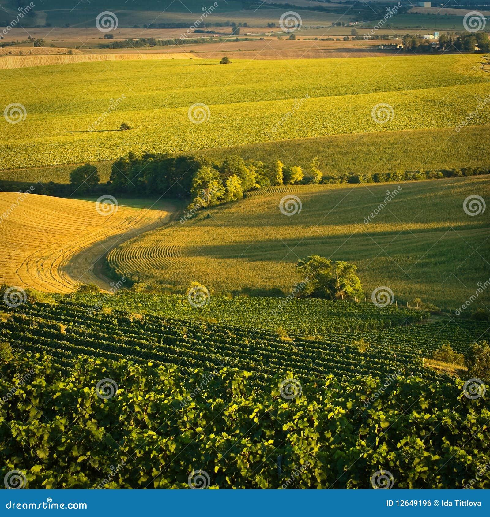 Wijngaarden in V augustus