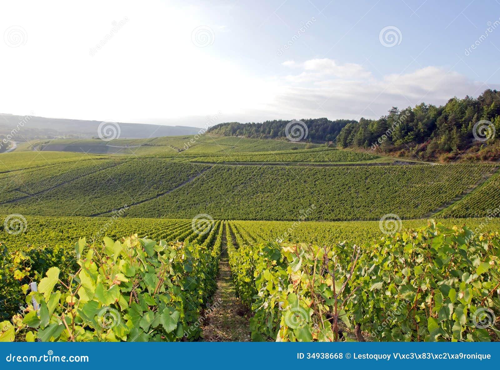 Wijngaarden van Chablis, Bourgondië (Frankrijk)