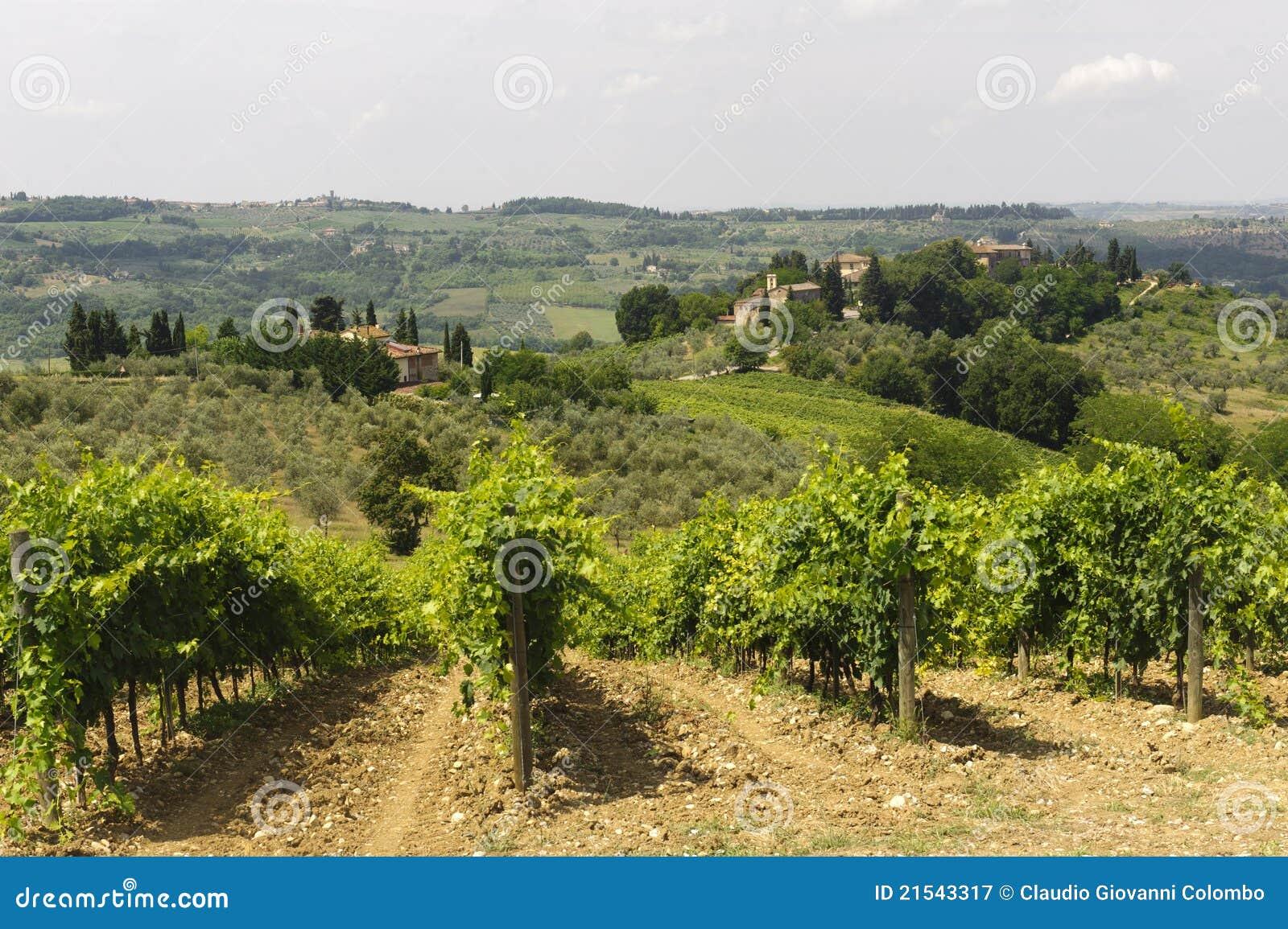 Wijngaarden van Chianti (Toscanië)