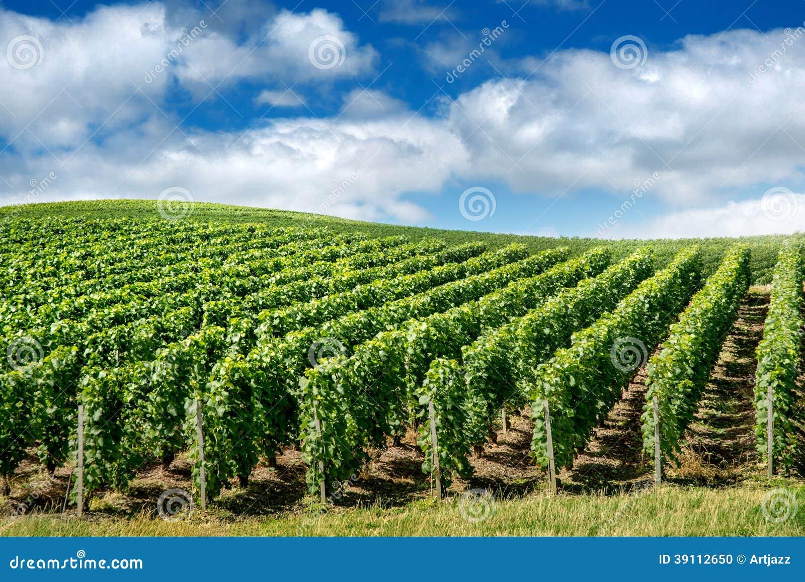 Wijngaardlandschap, Montagne de Reims