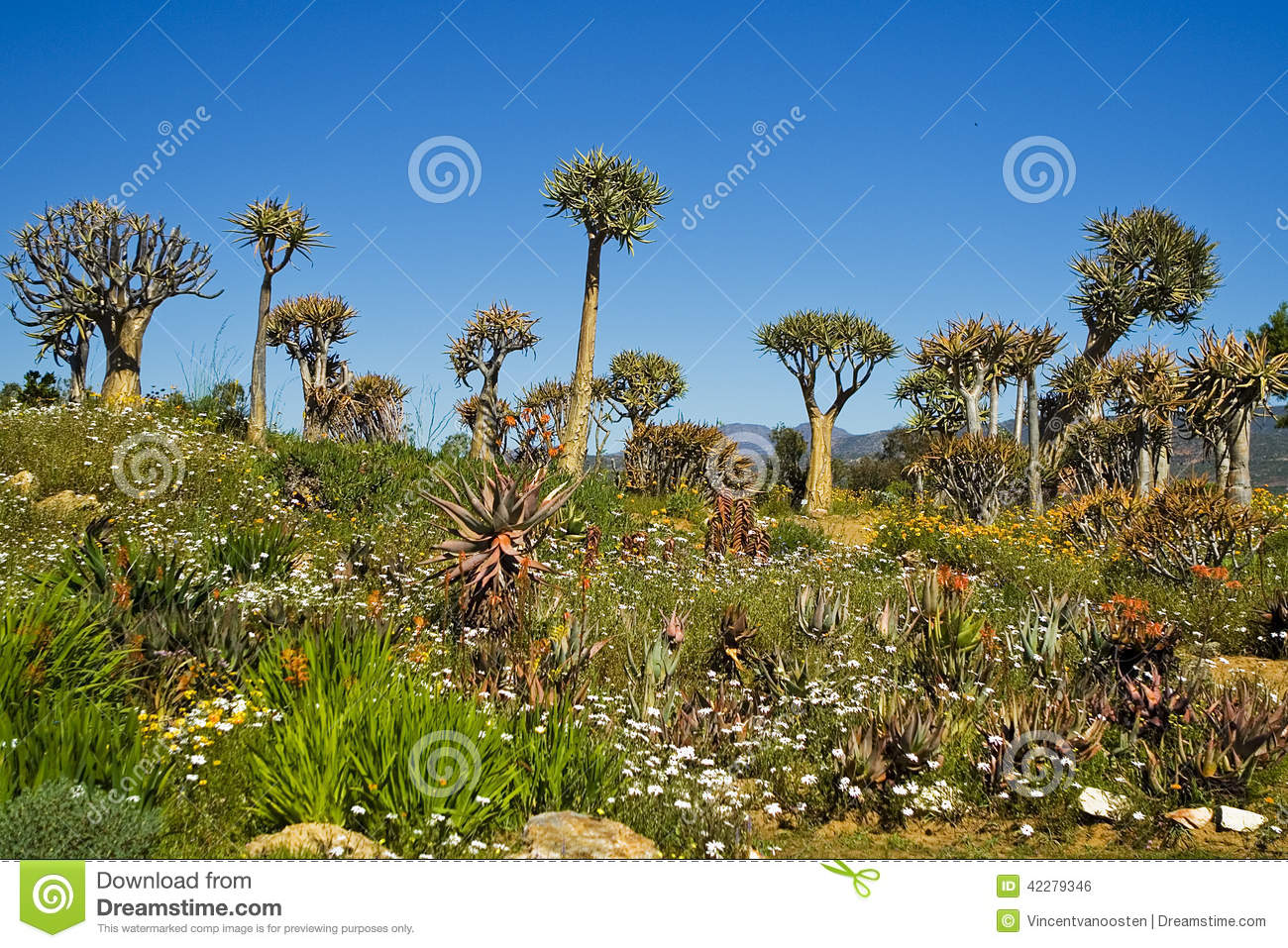 South african plants and trees - photo#27