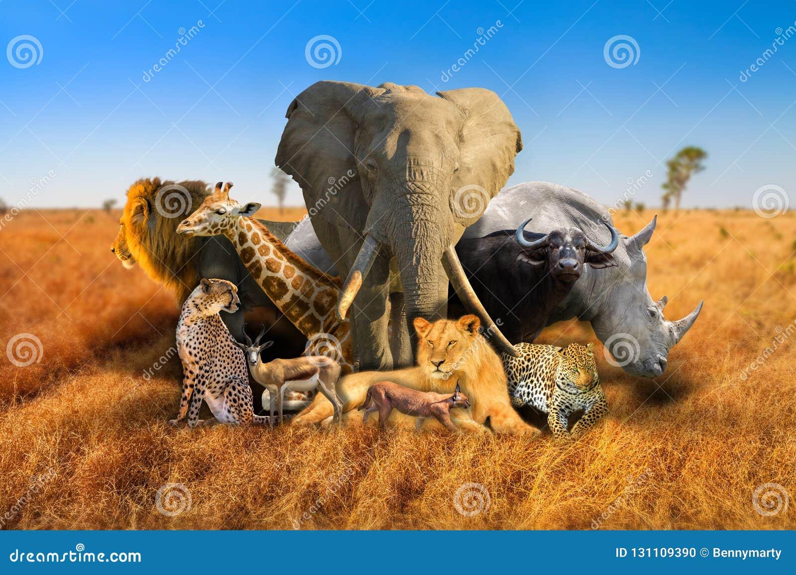 Wild african animals composition