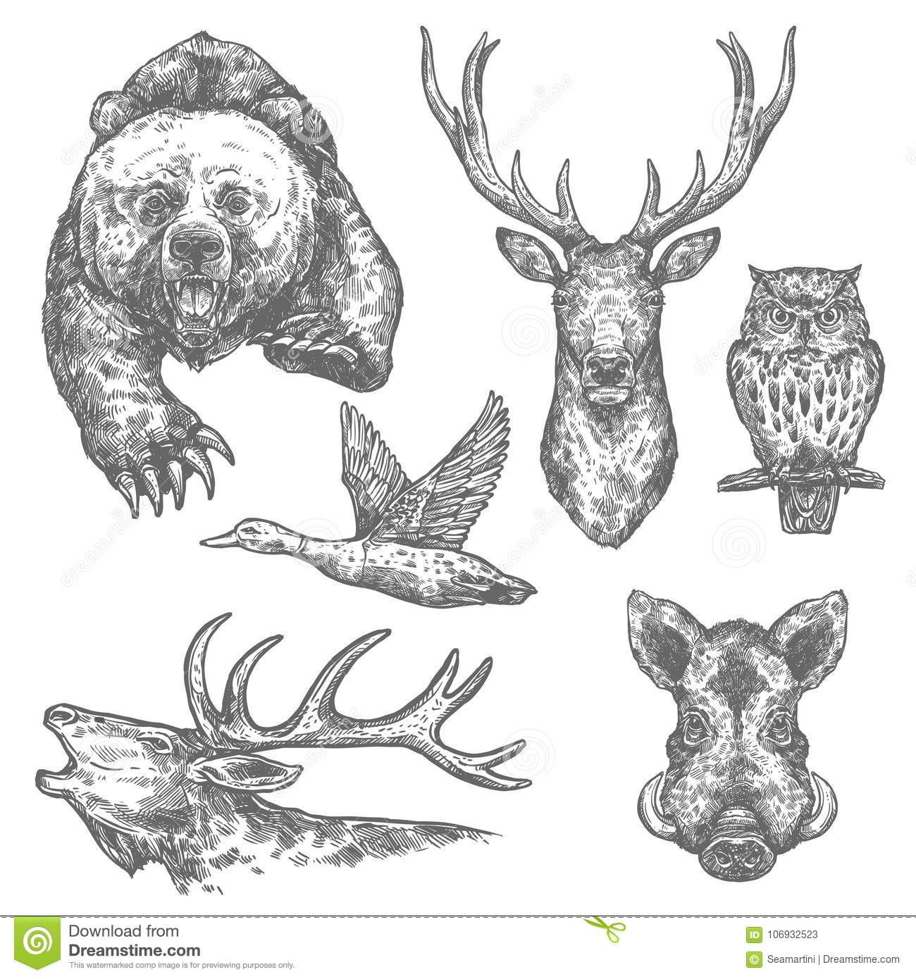 Wild animal and bird isolated sketch with bear and deer moose and owl boar elk and duck carnivore and herbivore animal for hunting sport