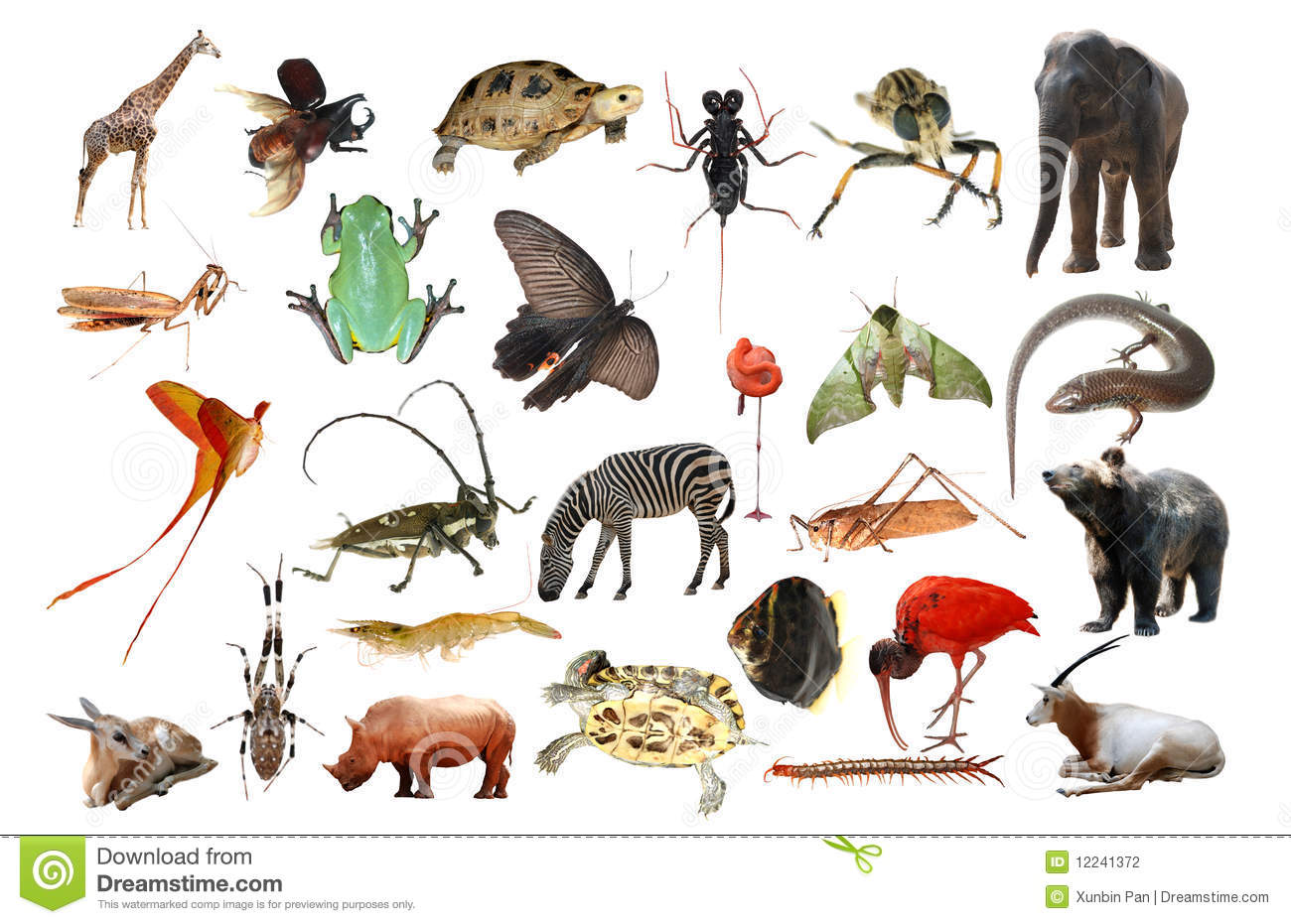 Wild Animal Collection Stock Photography - Image: 12241372