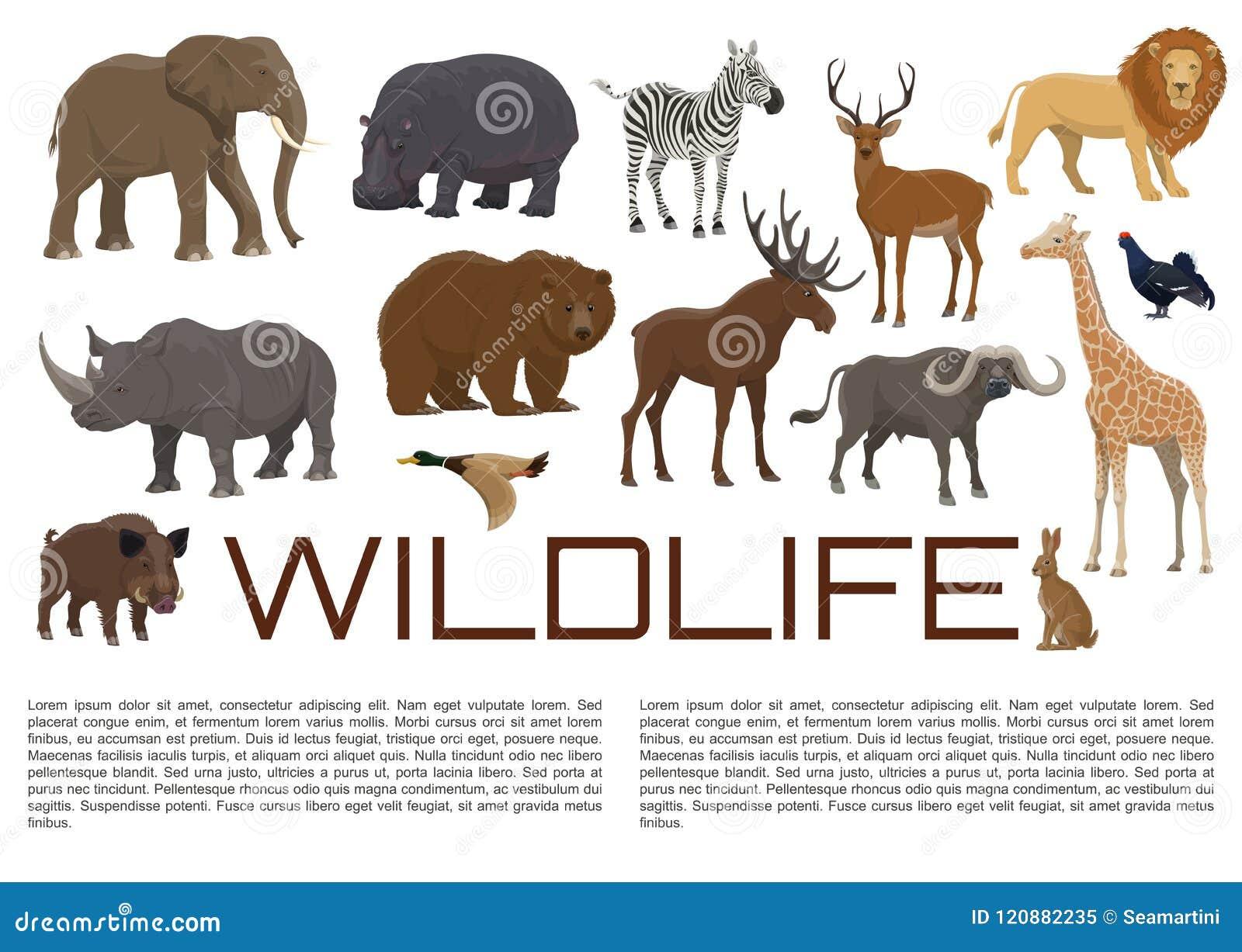 Vector Wildlife Poster Of Wild Animals Stock Vector - Illustration of boar,  duck: 120882235