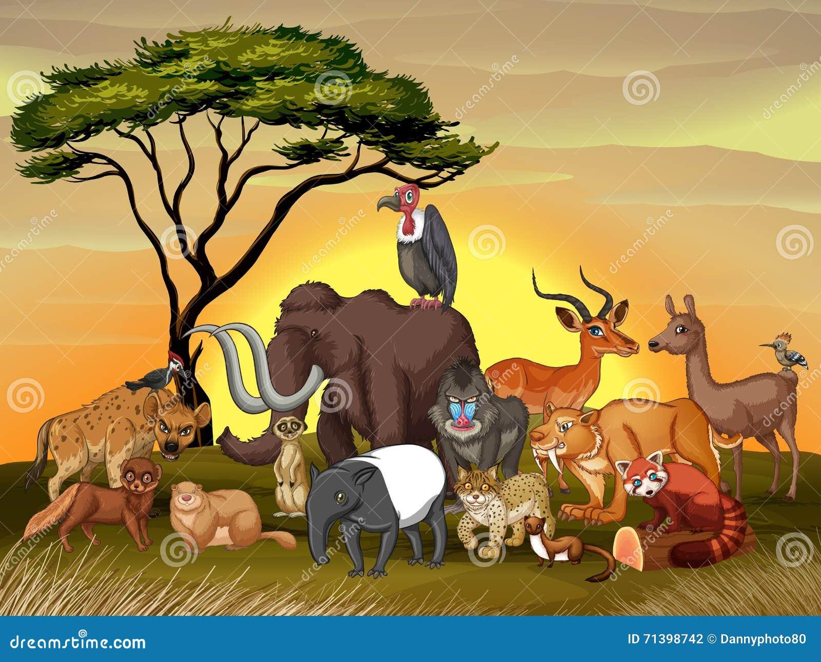 Wild Animals In The Savanna Field Stock Illustration - Image: 71398742