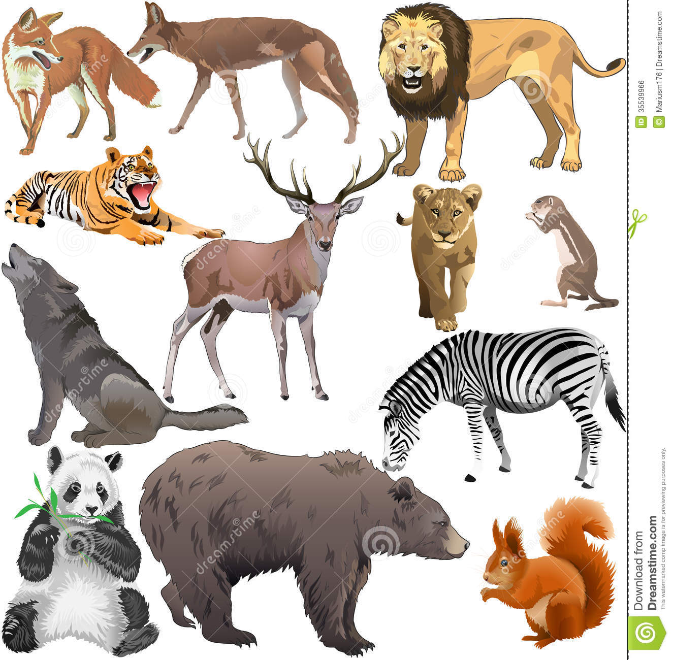 Pictures Of Wild Animals Wild animals
