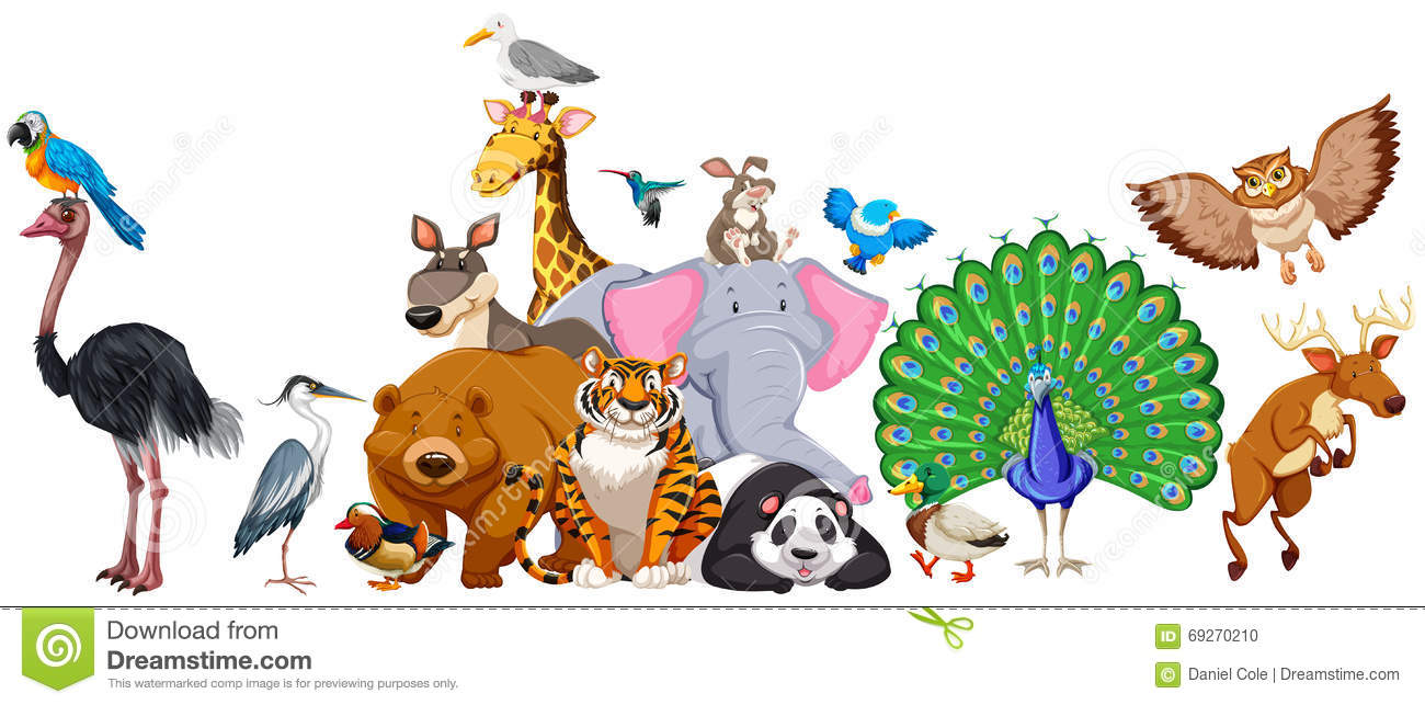 Wild Animals Standing In Group Stock Vector Illustration