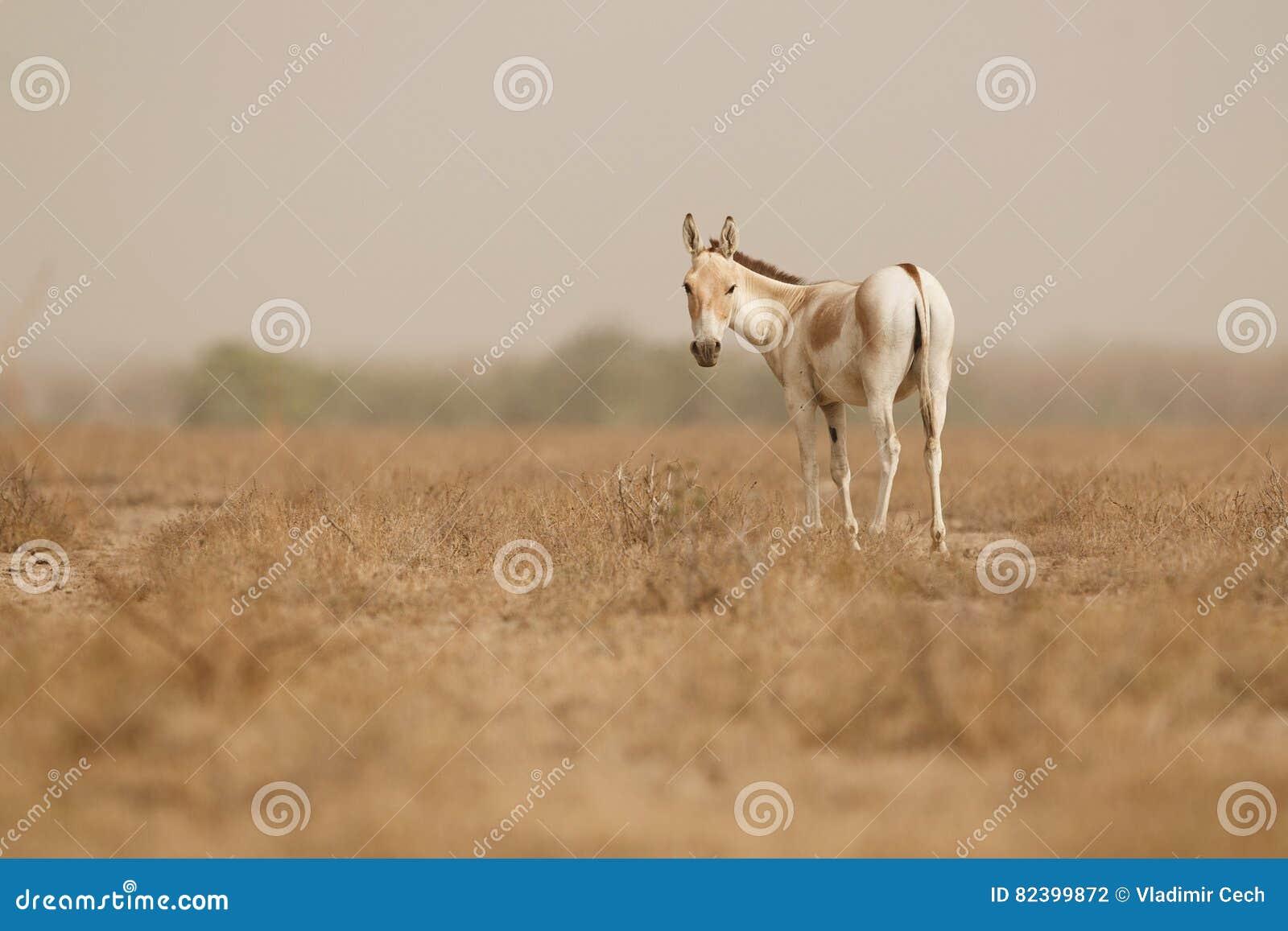 Desert Little Rann Of Kutch Stock Photography ...