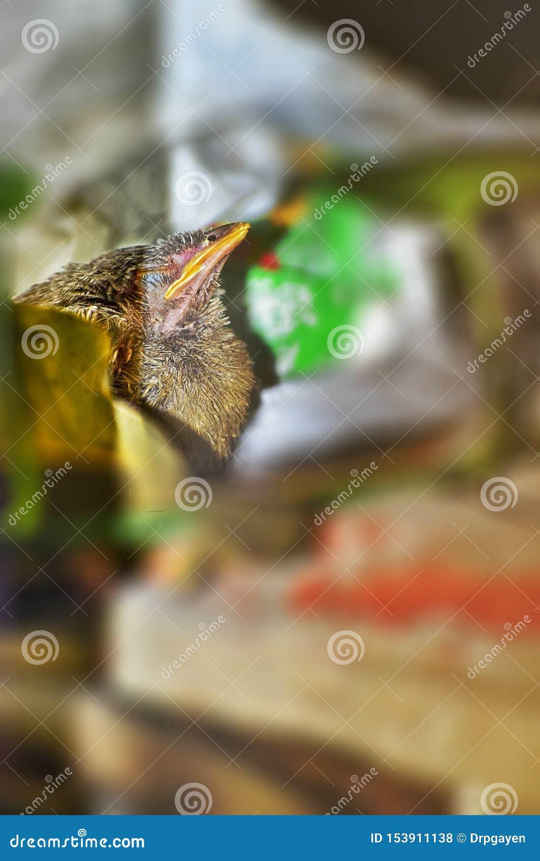 Wild Bird in its natural habitat . India. May 2019