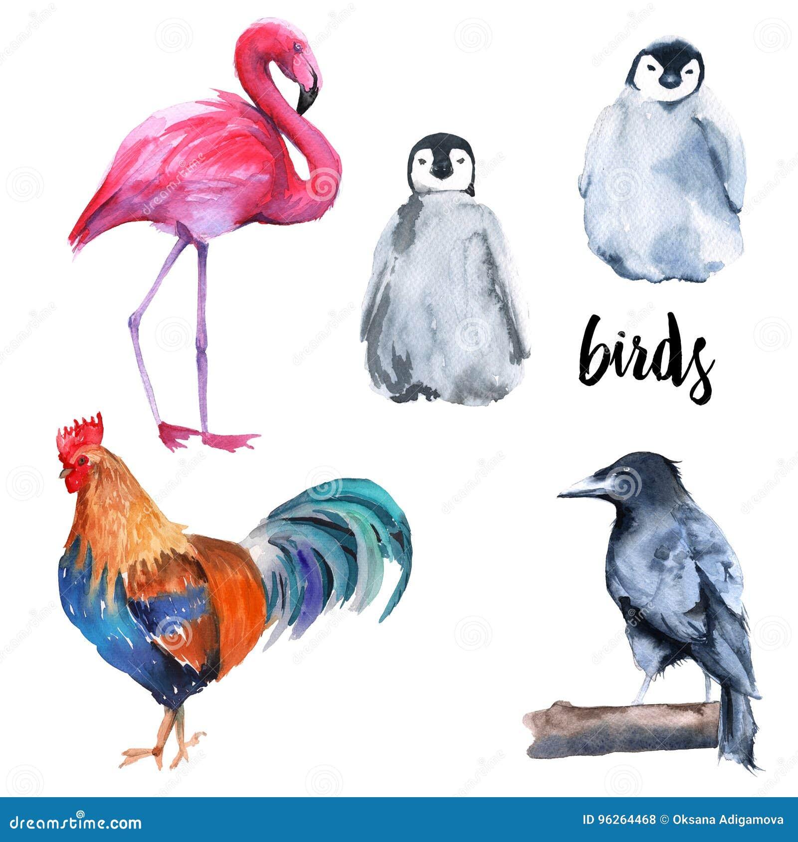 Wild birds set. Penguin, crow, flamingo, cock. on white background.