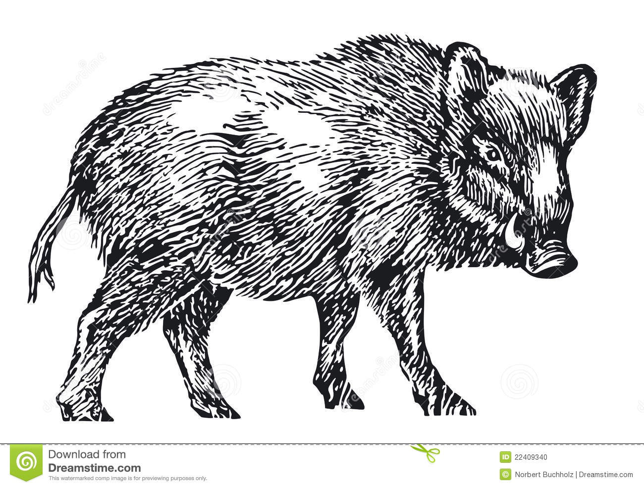 Wild Boar Stock Vector Illustration Of Forest Hunting