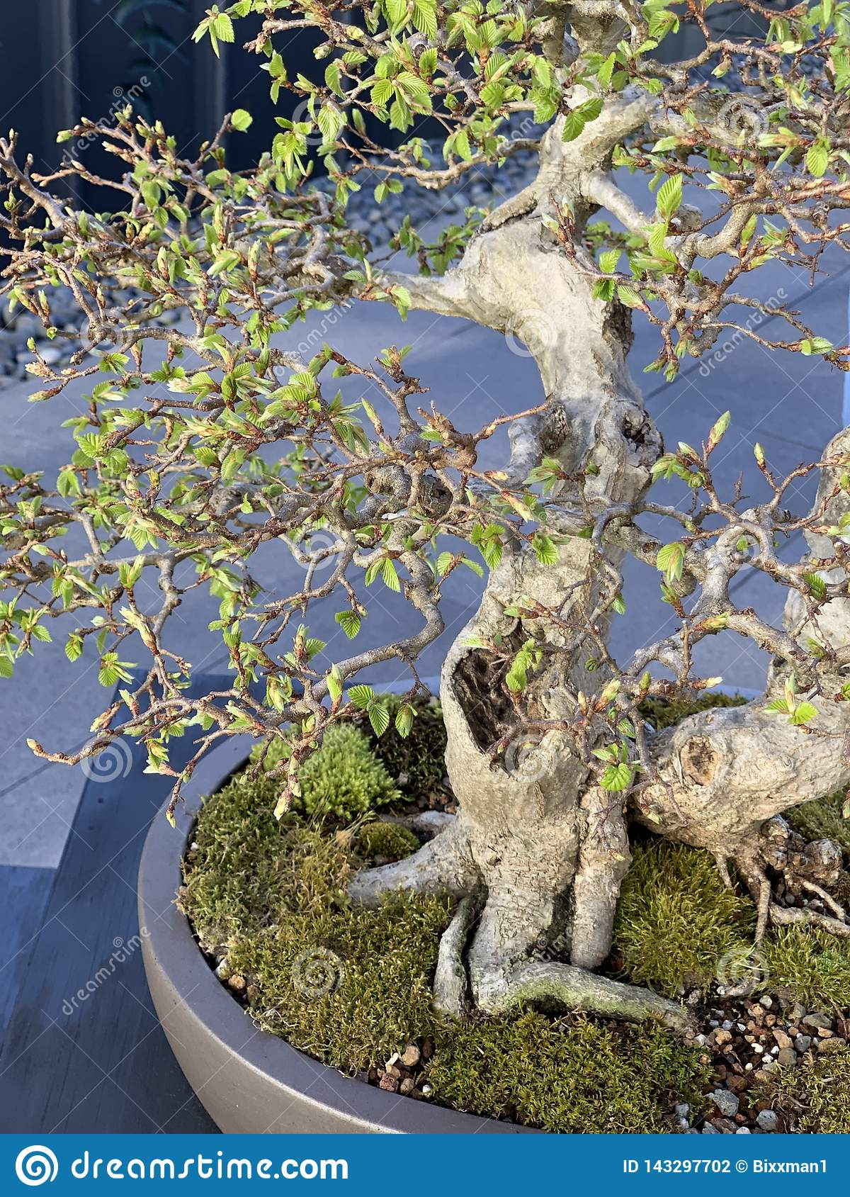 Wild Bonsai Bog