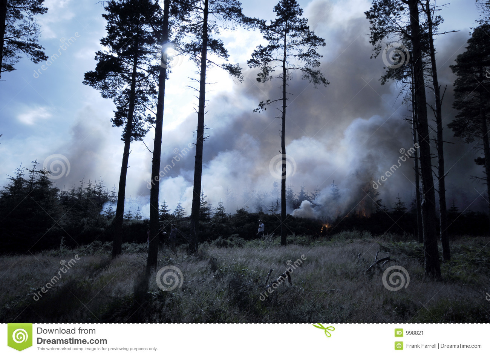 Wild brandskog