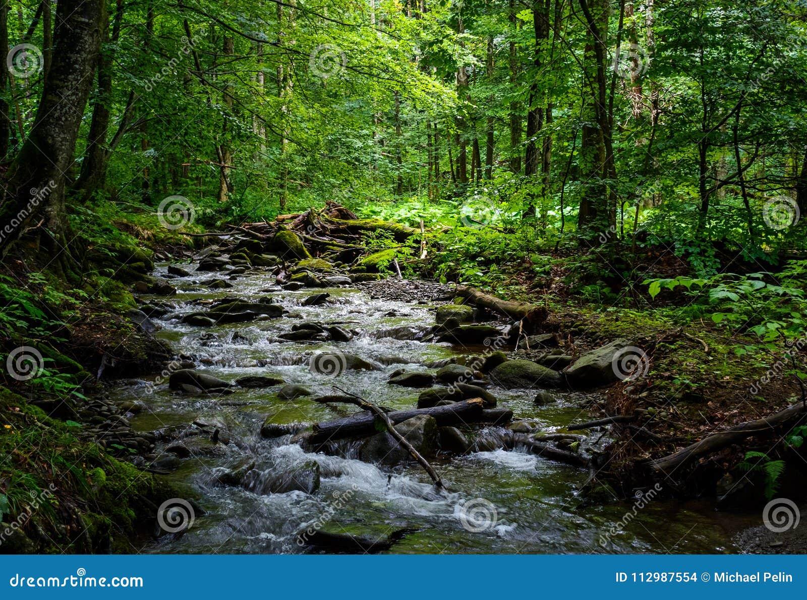 Wild brook in the dark forest