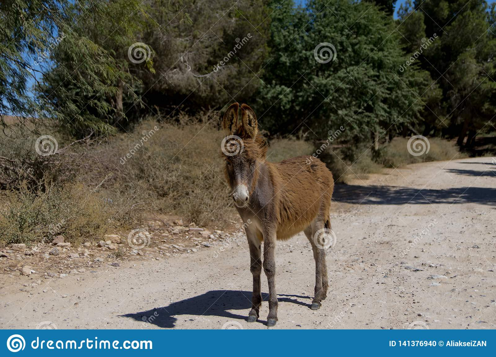 A wild brown donkey stands on the road in the forest