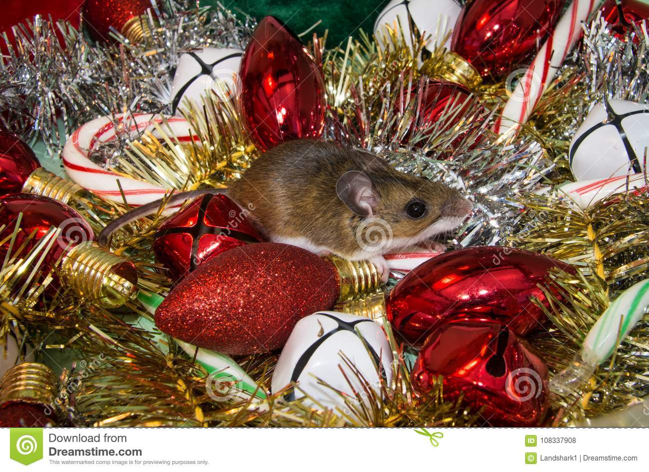 a side view of a house mouse sitting on xmas decorations white and red bells gold and silver garland red bulbs and green and red and green candy canes