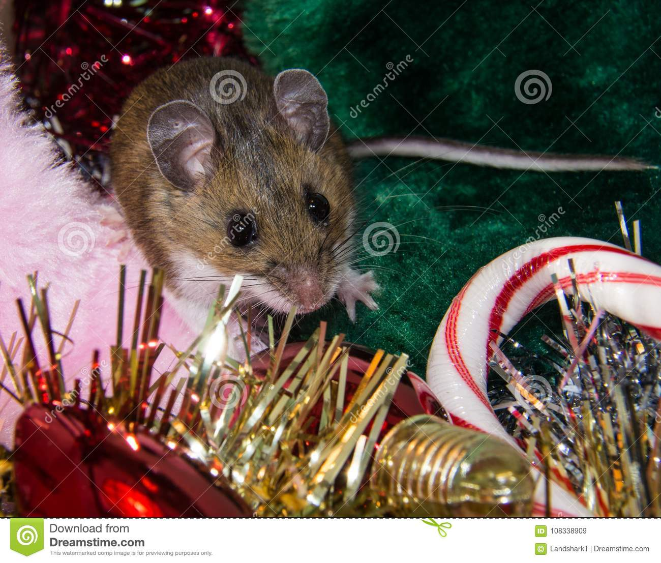 a wild brown house mouse sitting on a pile of christmas decorations