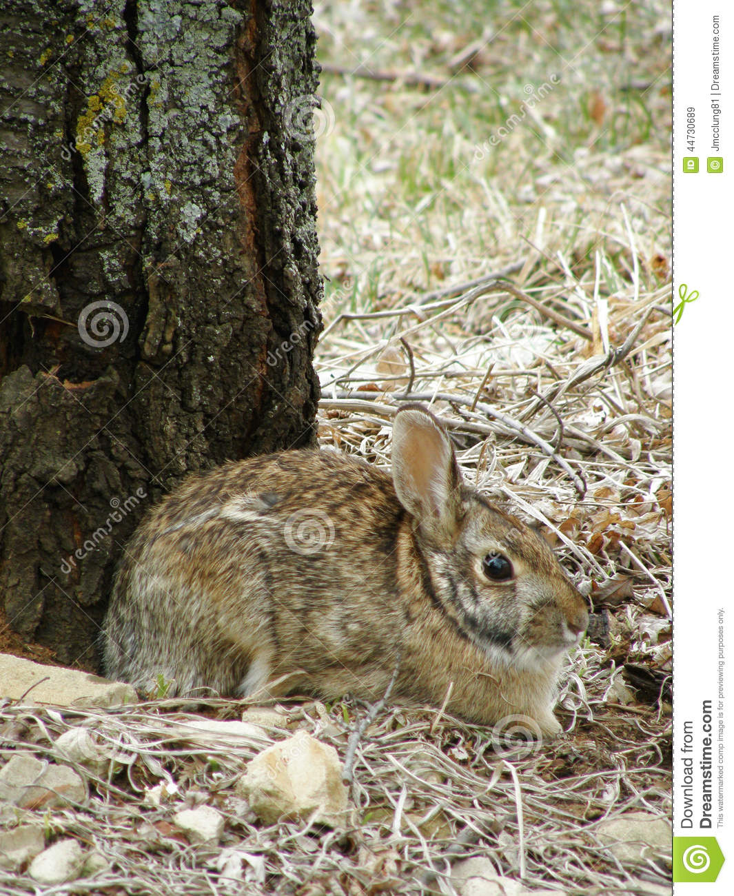 Wild bunny rabbit stock image  Image of hiding, animal