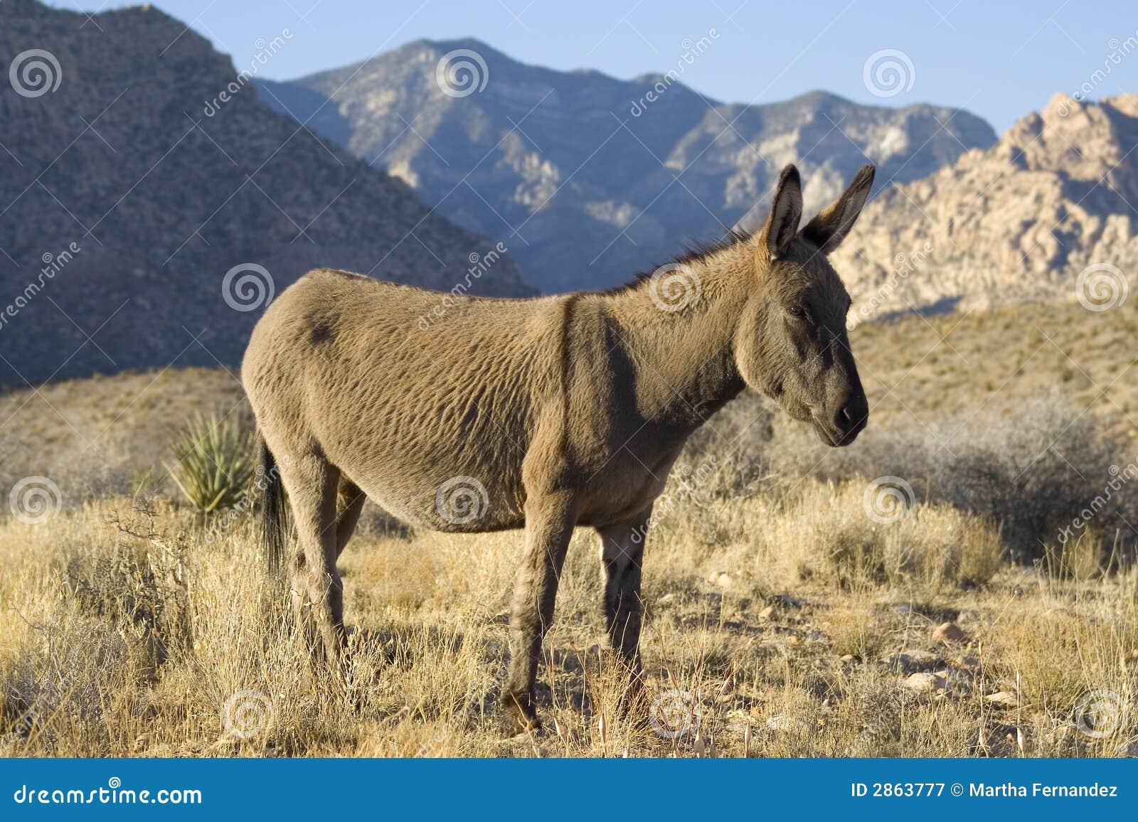 all for free credit burros manaderos