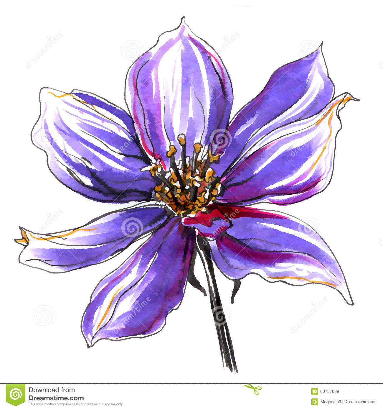 Wild Clematis Flower. Hand Drawn Illustration. Stock ...