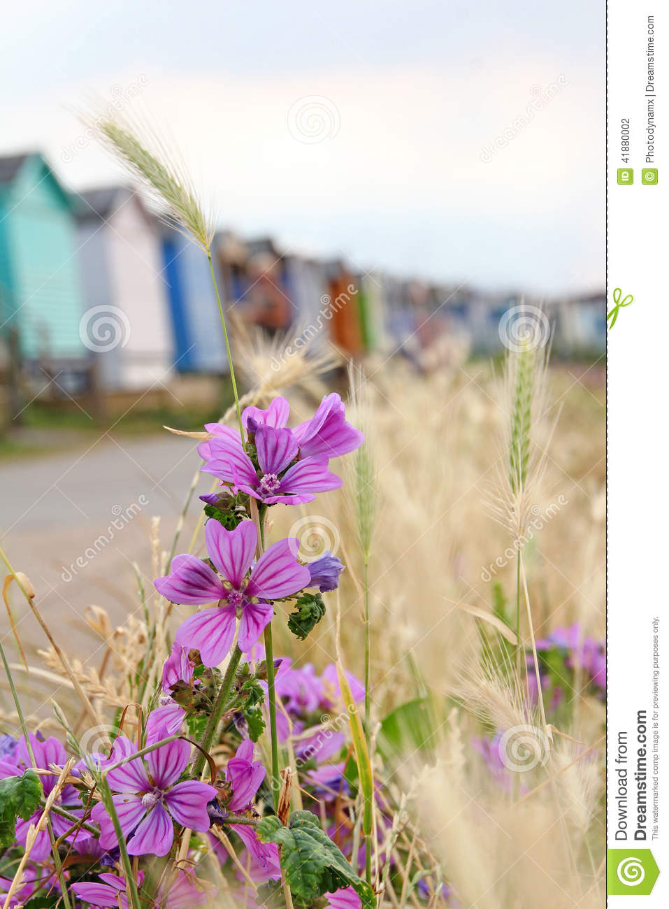 Wild coastal flowers and beach huts stock photo image of natural download comp mightylinksfo