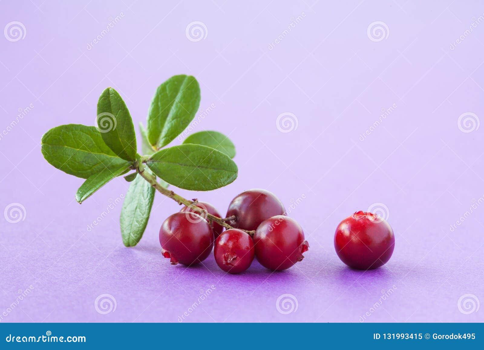 32 Wild Redberry Photos   Free & Royalty Free Stock Photos from ...