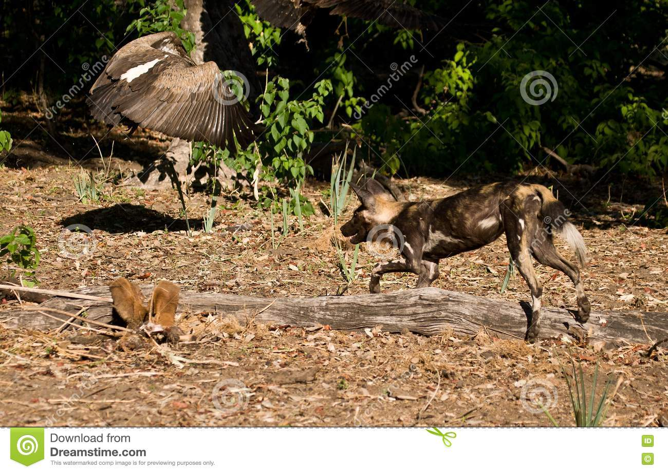 how to stop yourdog chasing kangroos