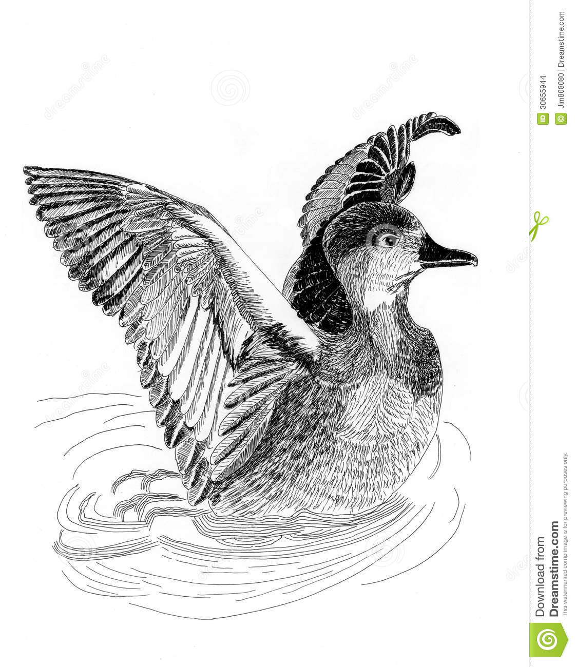 Wild Ducks Illustrantion Sketch Painting Stock Illustration - Illustration Of Funny Duck 30655944