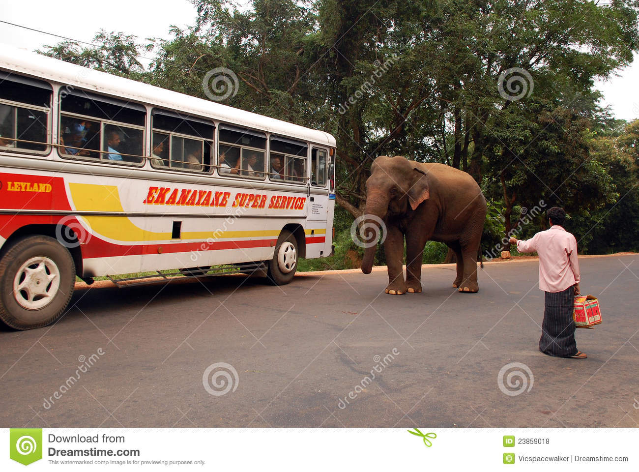 Wheels on the Bus go Round and Round || Elephant Version ...