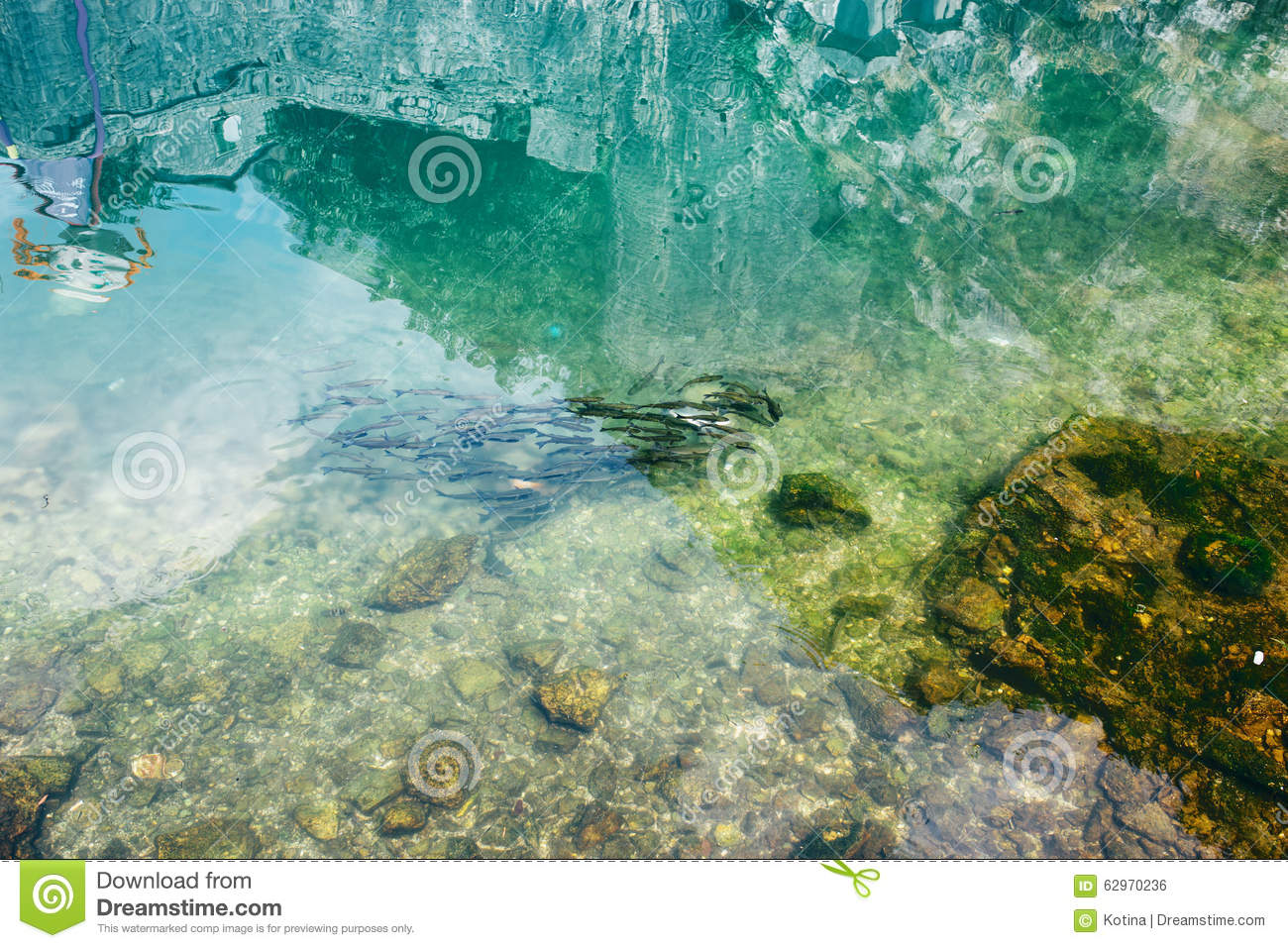 Wild fish in a pond near kotor fortress stock photo for Stocked fishing ponds near me