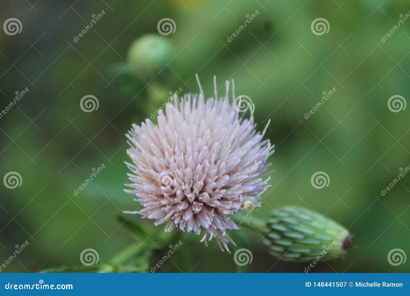 Wild flower ball
