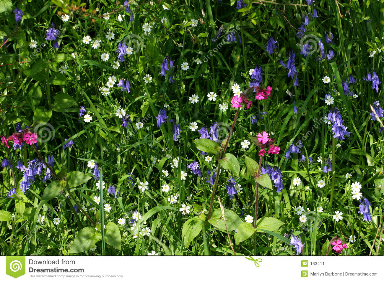 Wild Flower Selection